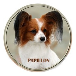 Pappilion