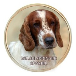 Welsh springer španěl