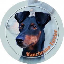 Manchester terier
