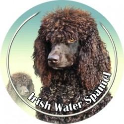 Irský vodní španěl