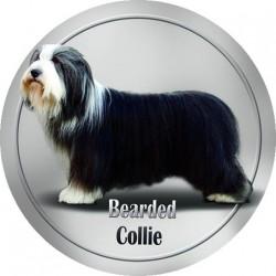 Bearded kolie