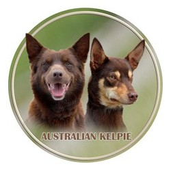 Australská kelpie