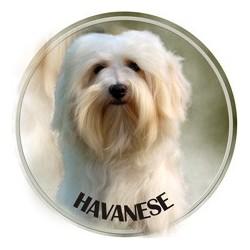 Havanský pes