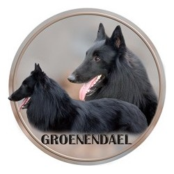 Belgický ovčák - Groenendael
