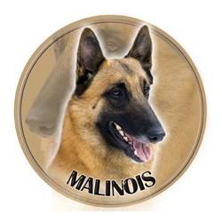 Belgický ovčák - Malinois